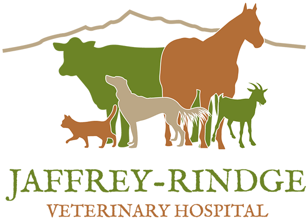 Veterinarian in Jaffrey
